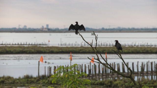 La nuova iniziativa per la salvaguardia del territorio lagunare